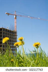 dandelions and new building