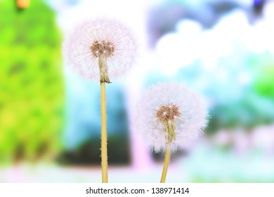Dandelions on bright background