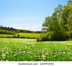Dandelions on meadow and clear sky. Spring landscape.