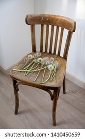 Dandelions on an old wooden Viennese chair