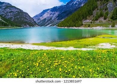 Dandelions on the shore of lake Livigno