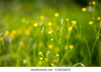 Dandelions on vivid green grass with chamomiles. Summer nature