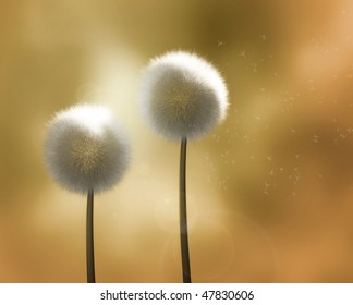 Dandelions in the Wind - Two backlit dandelion flowers in golden light, with wind blowing the seeds away.  (Realistic high-resolution render.)