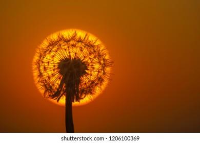 Dandilion Colck at sunset