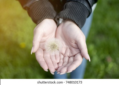 Dandilion hold in woman hand standing on the green grass, stand