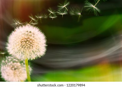 Dandilion seeds floating away from the flower on a colourful background