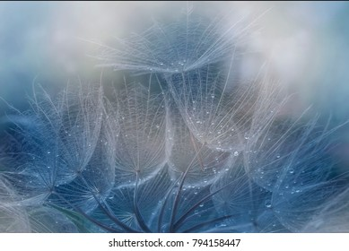 Dandilions salsify's and seeds