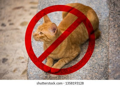 Danger to humans from cats, toxoplasmosis, fleas, bites.