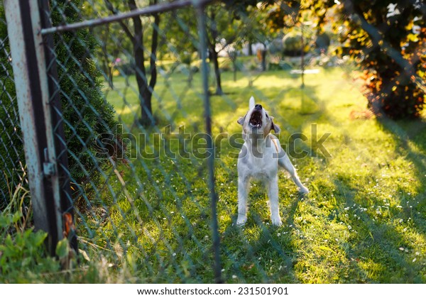 Dangerous aggressive dog behind the fence
