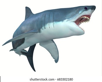 Shark images stock photos vectors shutterstock dangerous great white shark 3d illustration the great white shark can live for 70 years altavistaventures Images
