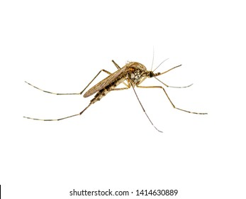 Malaria Images, Stock Photos & Vectors | Shutterstock