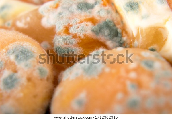 Dangerous mold on a sponge cake in a plastic container