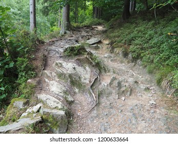 Dangerous mountain path with boughs and stones