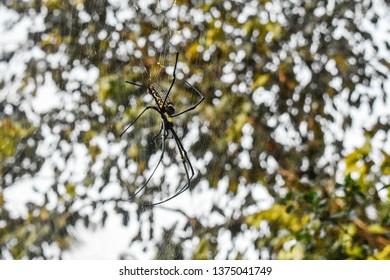 Dangerous Spider By Ashish
