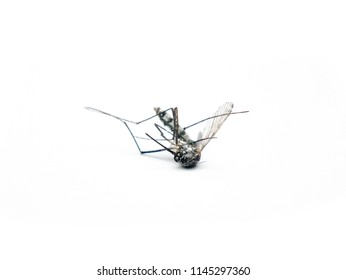 Dangerous Zika virus aedes aegypti Dead mosquitoes on white background