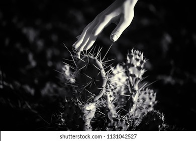 Dangers. Female hand touching big cactus. Wild nature and human, ecofriendly lifestyle. Ecological problems caused by human activity. Botanic exploration and natural herbals. Eco bio concept