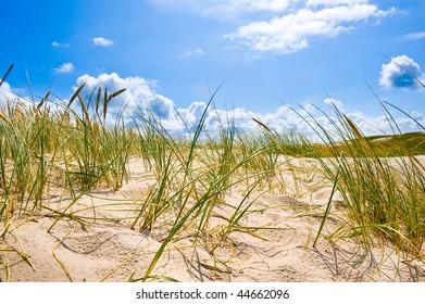 Danish coast landscape