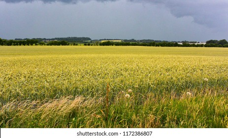 Danish farm land - monoculture