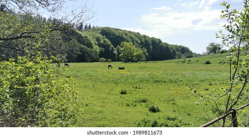 Danish green field with horses eating grass and a stream with water flowing
