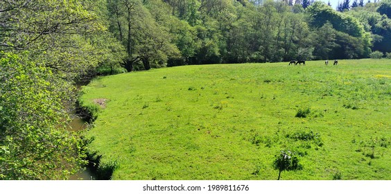 Danish green field with horses eating grass
