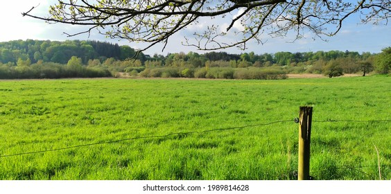 Danish green grass field and flat landscape in the countryside