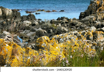The danish nature at Bornholm Island, Denmark. The rocky  beach and summer flowers on sunshine day at Bornholm, one of the most beautiful nature Island in Denmark.