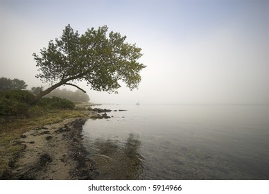 Danish shoreline in fog
