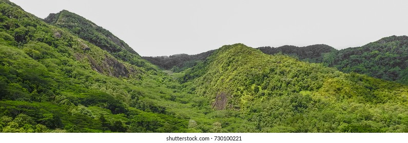 Dans Gallas trail. View of Seychelles jungle. Mahe island. Africa