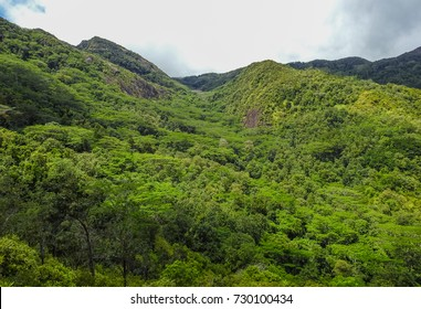 Dans Gallas trail. View of Seychelles jungle. Mahe island. Africa