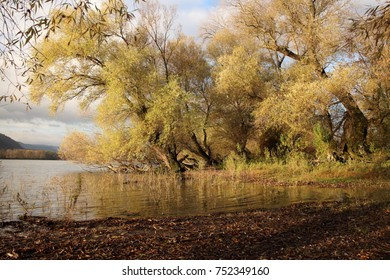 Danube bend autumn forest