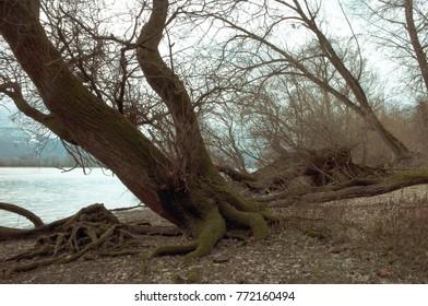 Danube bend winter lanscape