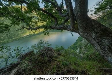 Danube Gorges. Iron Gates - Romania. Djerdap National Park - Serbia. Carpathian Mountains.
