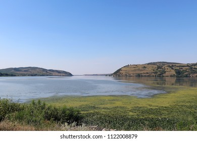 Danube river shore in Serbia with green lichens on water surface