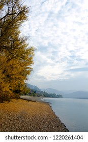 At the Danube side in Zebegény, Hungary, Autumn, Trees