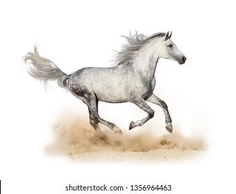 Dapple gray arabian stallion running in dust isolated