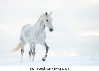 Dapple gray horse in cold winter day