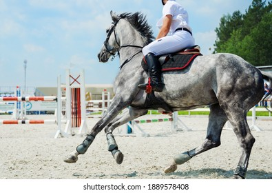 Dapple grey horse galloping on the equestrian show jumping competitions against the background of a competitive field in summer