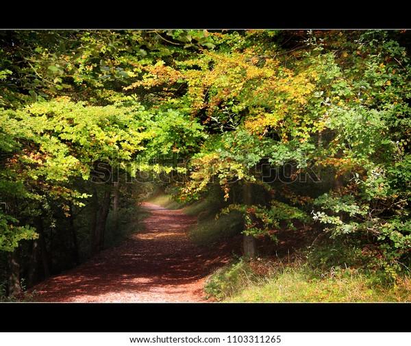 dappled autumn colours