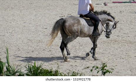 Dappled gray horse with elegant posture.
