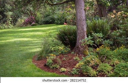 Dappled sunlight decorates the lawn of shady park filled with native plants in Eugene Oregon.