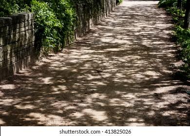 Dappled Sunlight Falling on Dirt Path