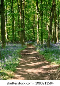 Dappled Sunshine on an English Woodland track lined with Spring Bluebells