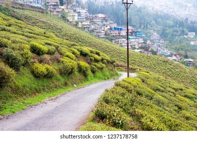 Darjeeling, India - Apr 19 2018- Tea Plantations at Happy Valley Tea Estate in Darjeeling, West Bengal, India. Darjeeling teas are regarded as one of the best world wide.