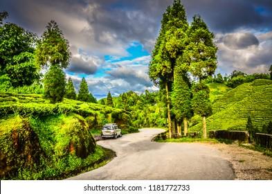 Darjeeling / India - September 2, 2012: Silver car on road winding through rolling hills of tea plantation fields in Darjeeling, India.