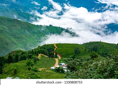 Darjeeling Tea and Tourism