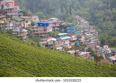 Darjeeling. West Bengal. India. 27 May, 2017. Documentary. Green tea fields and part of hill town in the mountains.