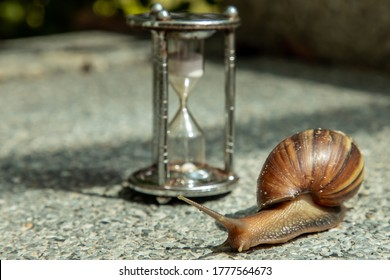 Dark achatina snail with Dark shell crawling on the Stone floor near Hourglass. Deadline concept and Slow current time. No focus, specifically.