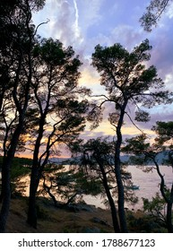 Dark Aleppo pine trees silhouettes against purple and violet sky, clouds and sea at sunset.