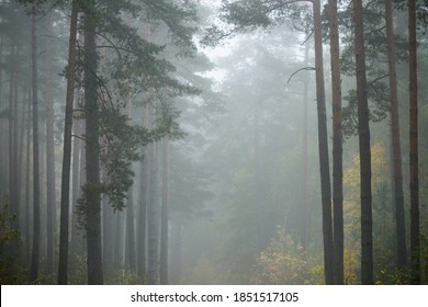 Dark atmospheric landscape of the evergreen forest in a fog at sunrise. Pine, fir, birch trees, green and golden plants close-up. Ecology, autumn, ecotourism, environmental conservation. Europe - Shutterstock ID 1851517105