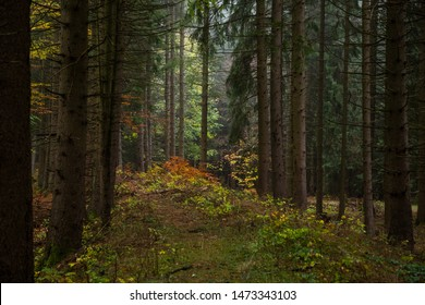 Dark autumn coniferous forest with colorful colors